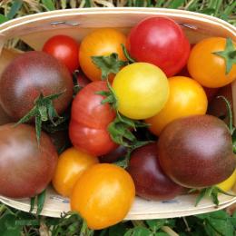 tomates cerises en mélanges